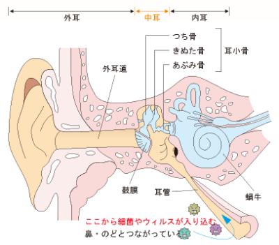 中耳炎の説明画像1